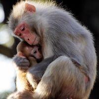 Los monos cuidan de sus crías