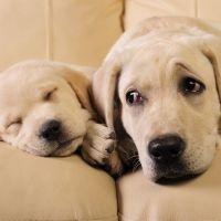 Perrito durmiendo bajo la mirada de su madre