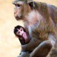Monito en brazos de su madre