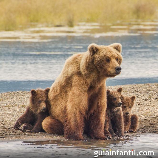 Un baño para mamá y sus ositos