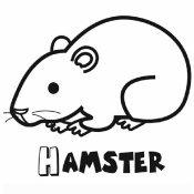 Dibujo de un hamster para colorear