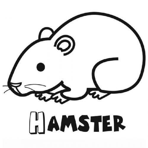 Coloreando nuestros dibujos  830-4-dibujo-de-un-hamster-para-colorear