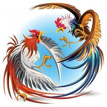 Los dos gallos