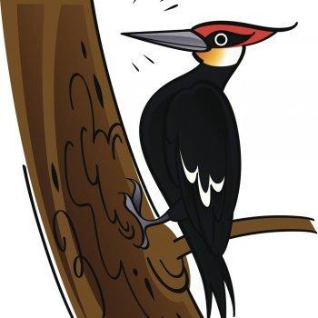 El pájaro Nicanor