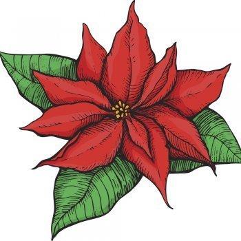 La flor de Nochebuena. Leyenda Mexicana