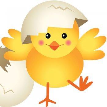 Un pollito llamado Llito