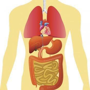 Cuentos sobre el cuerpo humano