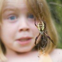 5 trucos para evitar picaduras de araña en los niños