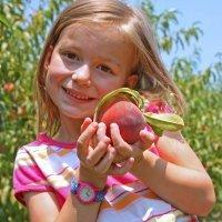 Beneficios del albaricoque y el melocotón para los niños