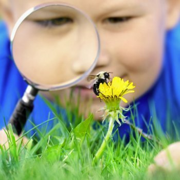 Curar picaduras de abeja o avispa