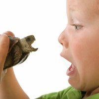 Cómo curar mordeduras de ratas, reptiles y otros animales en los niños