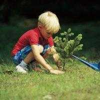 ¿Por qué debemos plantar un árbol con los niños?