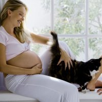 ¿Puede una mujer embarazada convivir con un gato?