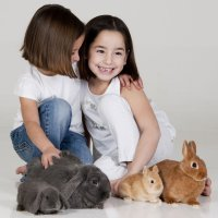 Pequeñas mascotas ideales para niños y embarazadas