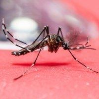 Colombia y El Salvador piden evitar embarazos por el virus Zika