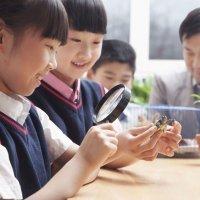 Las 7 asignaturas escolares más extrañas para los niños