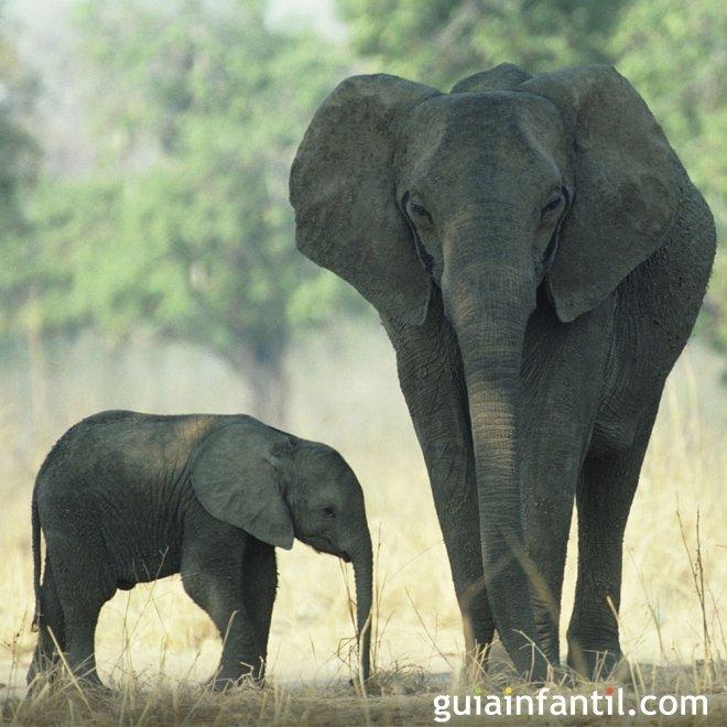 Instinto maternal de los animales