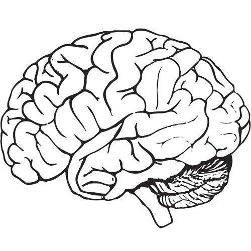Imagen de un cerebro humano para colorear - Imagui