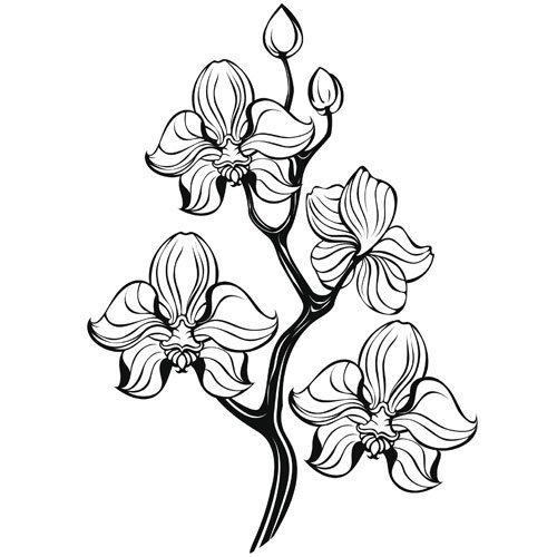 Adivinanza: ¿Cuál de las flores las cinco vocales lleva en su nombre?
