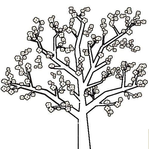 Adivinanza: Son nuestras blancas flores