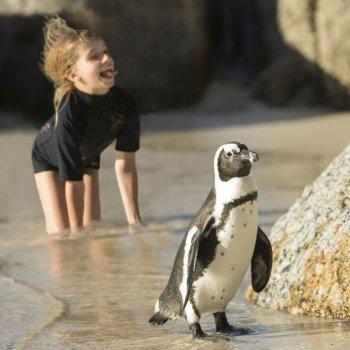 Las preguntas de los niños sobre los pingüinos