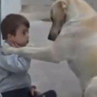 Un perro cuida a un niño con discapacidad
