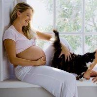 Qué es la toxoplasmosis y cómo afecta al feto en el embarazo