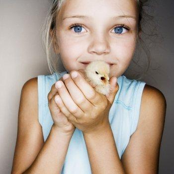 Las preguntas de los niños sobre los pollitos