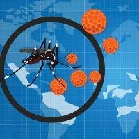 Preguntas y respuestas sobre el virus Zika