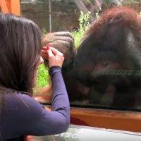 Las preguntas de los niños sobre los orangutanes