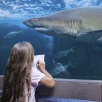 Conoce todo sobre los tiburones
