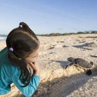 Las preguntas de los niños sobre las tortugas