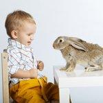 Aprendendiendo sobre animales