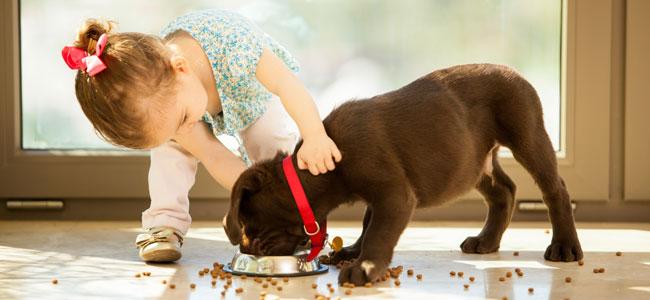 Responsabilidad de los niños con su mascotas según su edad