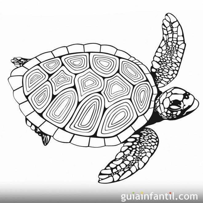 Tortuga nadando. Dibujo para imprimir y pintar