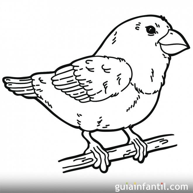 Dibujo de un pájaro en primavera para colorear