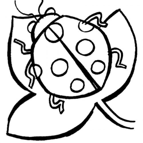Dibujo para niños de mariquita