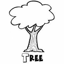 Por Qué Debemos Plantar Un árbol Con Los Niños