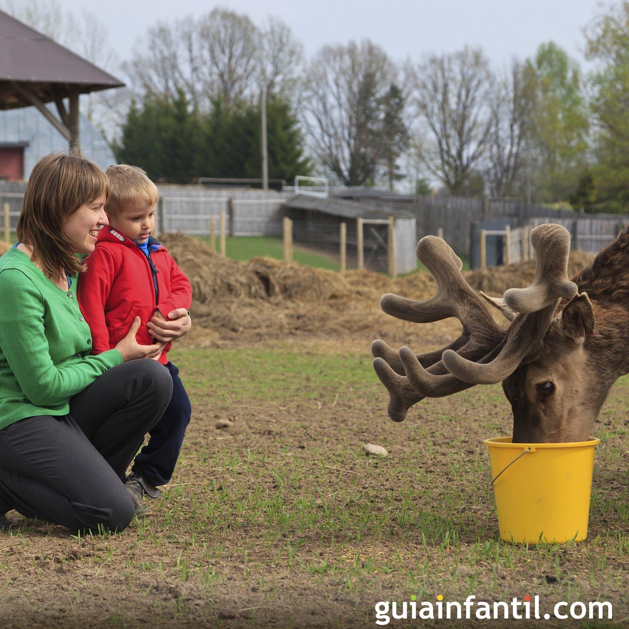 Pasar el día en el zoo junto a tus hijos