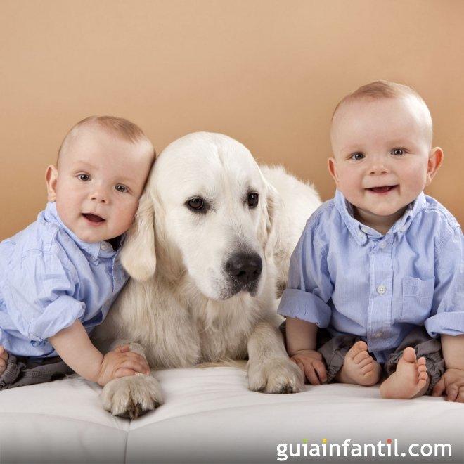 Con la mascota de casa fotos originales de gemelos - Mascotas originales para tener en casa ...