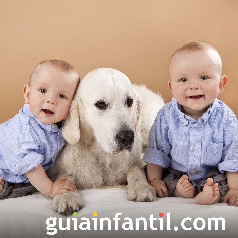 Con la mascota de casa fotos originales de gemelos - La casa de la mascota ...