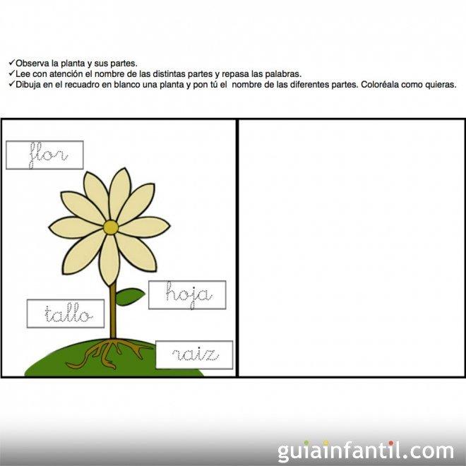 Conocimiento del medio. Partes de la planta