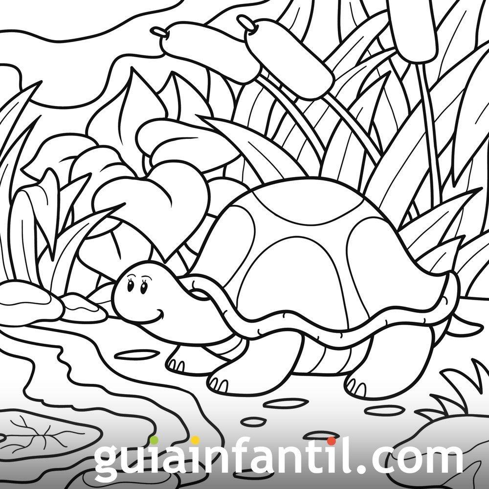 Tortuga jugando al escondite. Dibujo para colorear