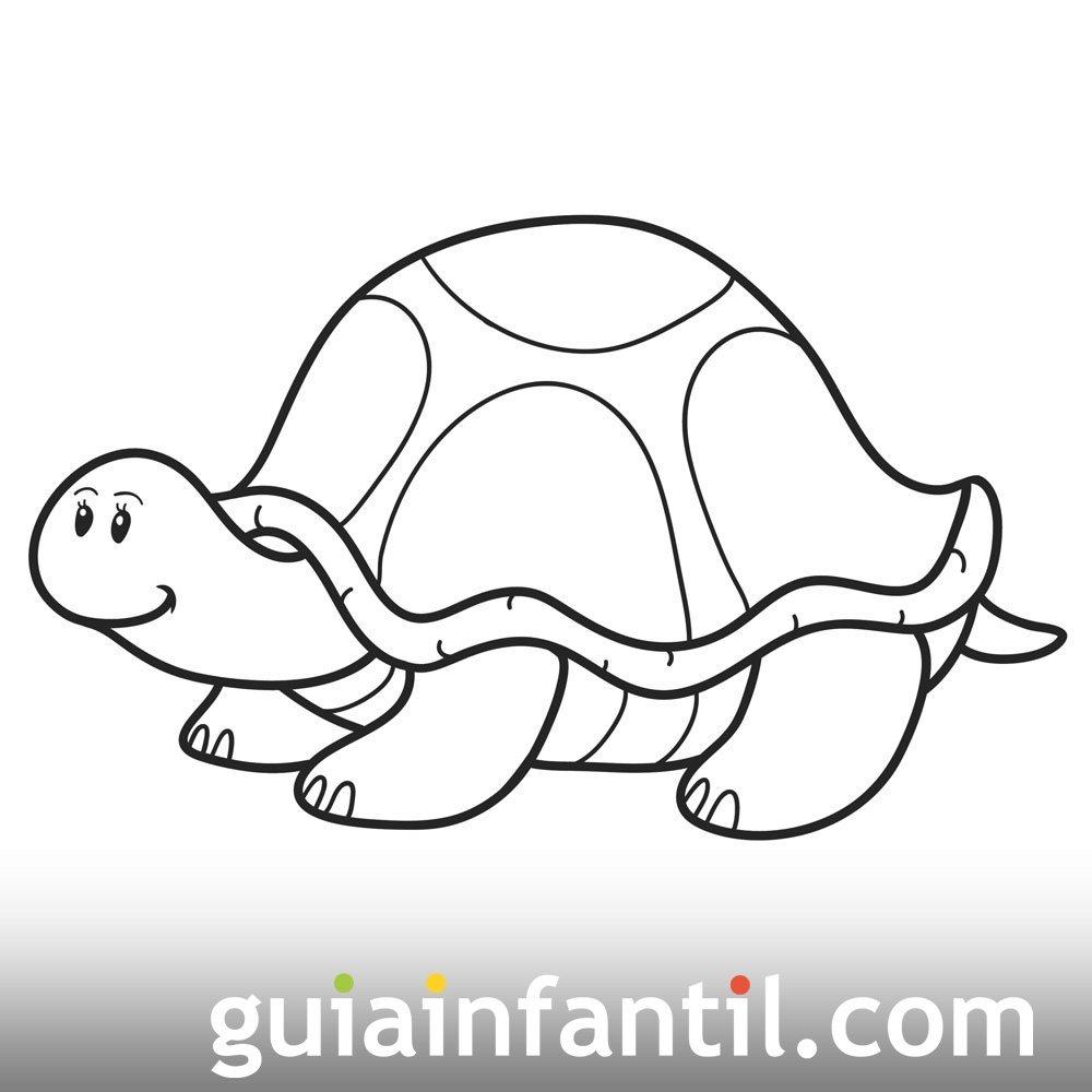 Tortuga Simpática Y Observadora Dibujo Para Colorear