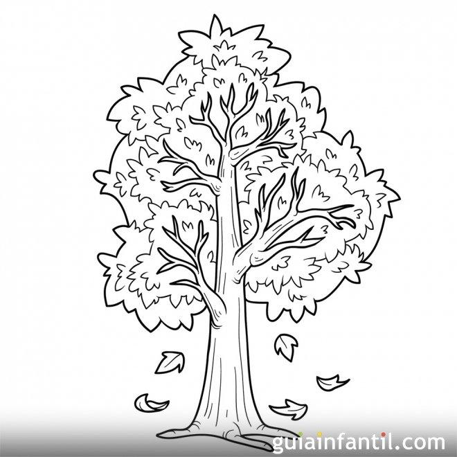 Árbol En Otoño. Dibujos Para Colorear