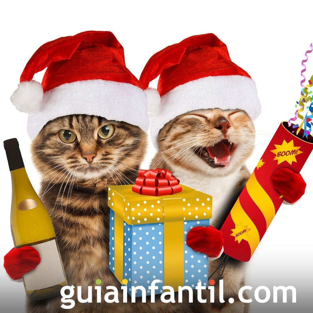 Fotos graciosas de Navidad