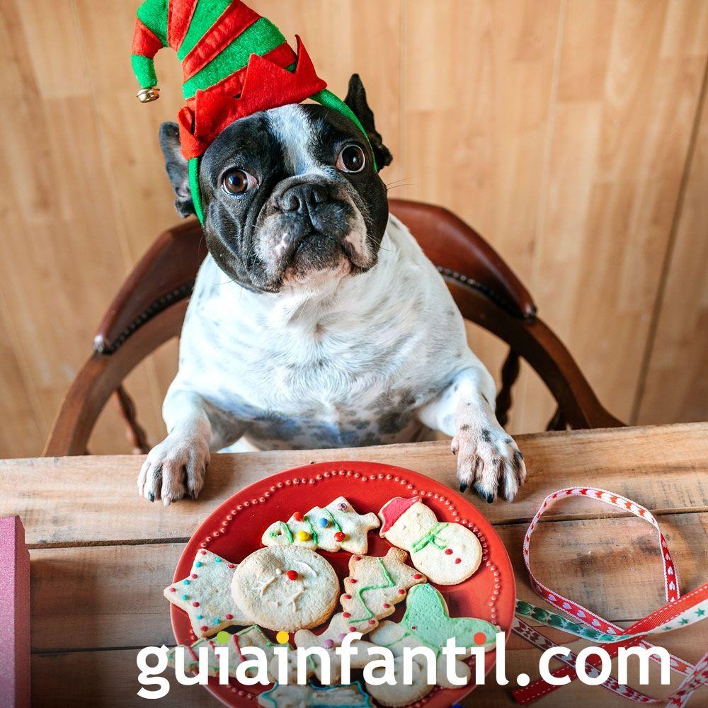 Fotos navideñas de animales graciosos