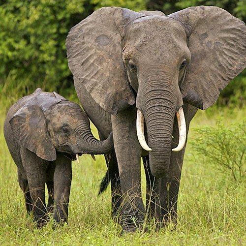Un pequeño elefante con su madre
