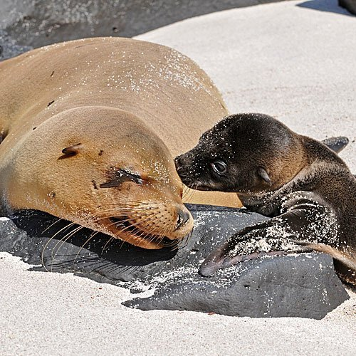 Cría de foca con su mamá