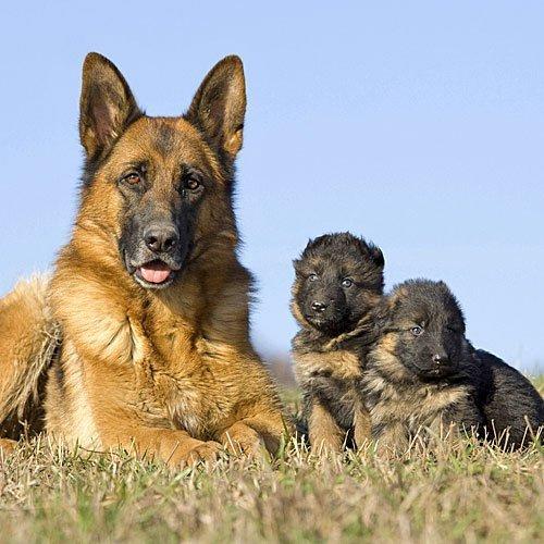 Mamá atenta ante el peligro de sus perritos